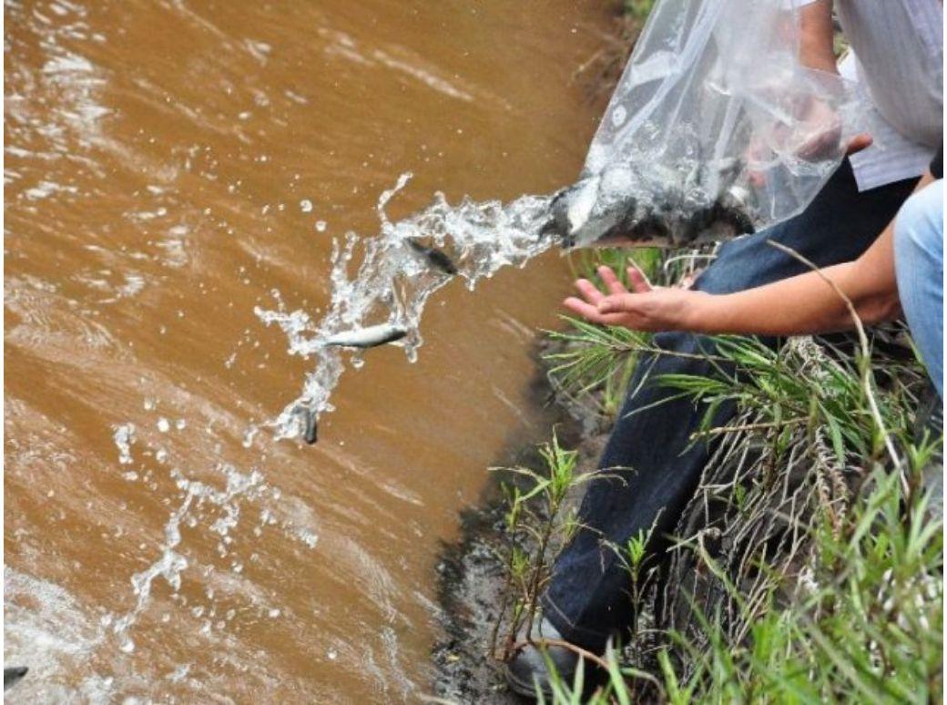 apap-proj-soltura-peixes