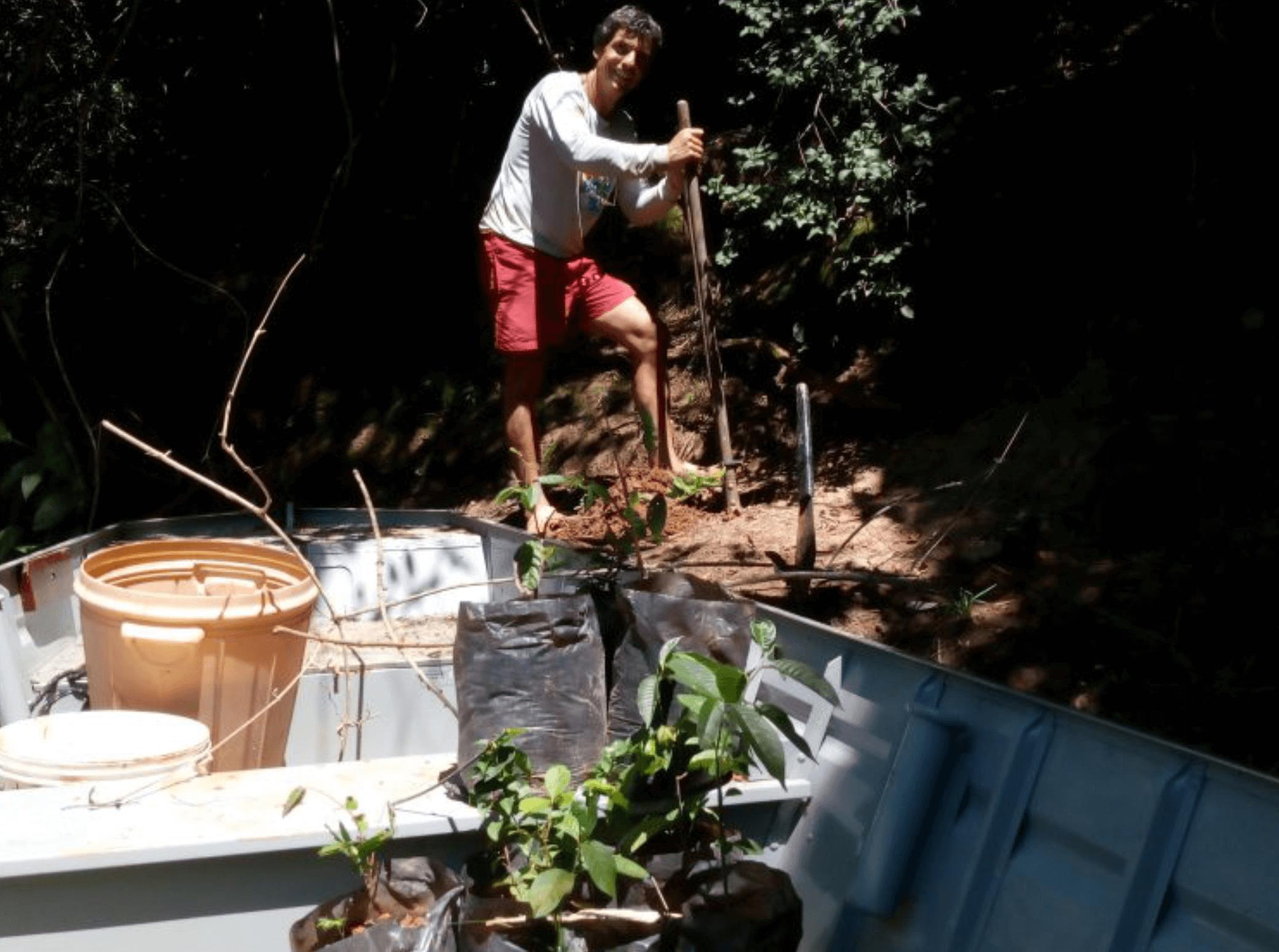 plantio de árvores